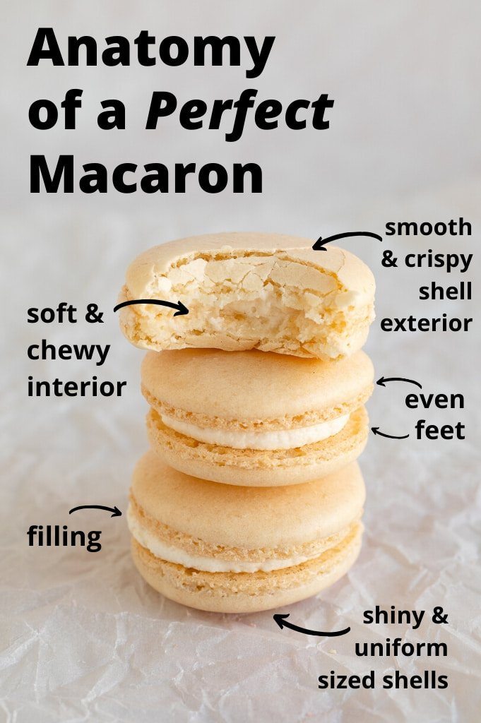 anatomy of a perfect french macaron close up
